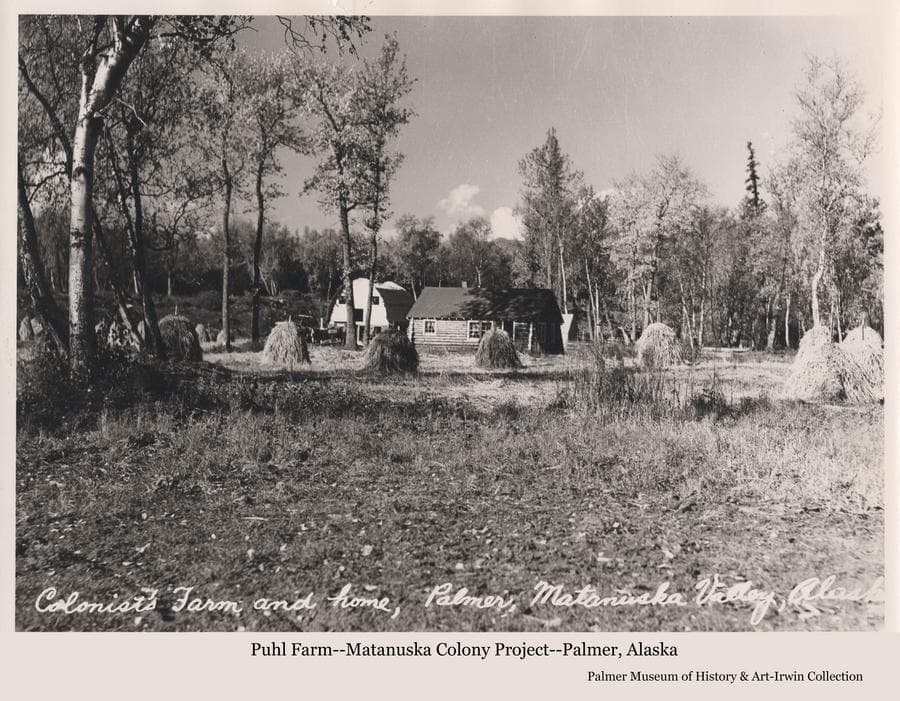 Image is a late summer view of a Colony log home, a barn under construction, and harvested hay stacked on stakes to dry in foreground. Scattered birch and cottonwood trees are in foreground and middle ground with heavy forest as the backdrop.