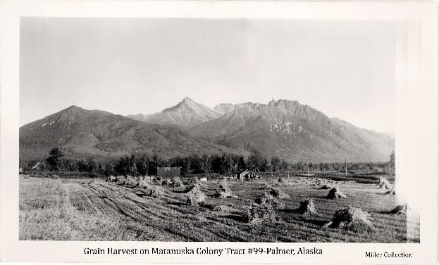 Image is an easterly view across a partially harvested grain field with uncut grain and harvested grain shocks in the foreground, a Colony house and barn in middle ground with heavy forest behind. Mountains form the backdrop.