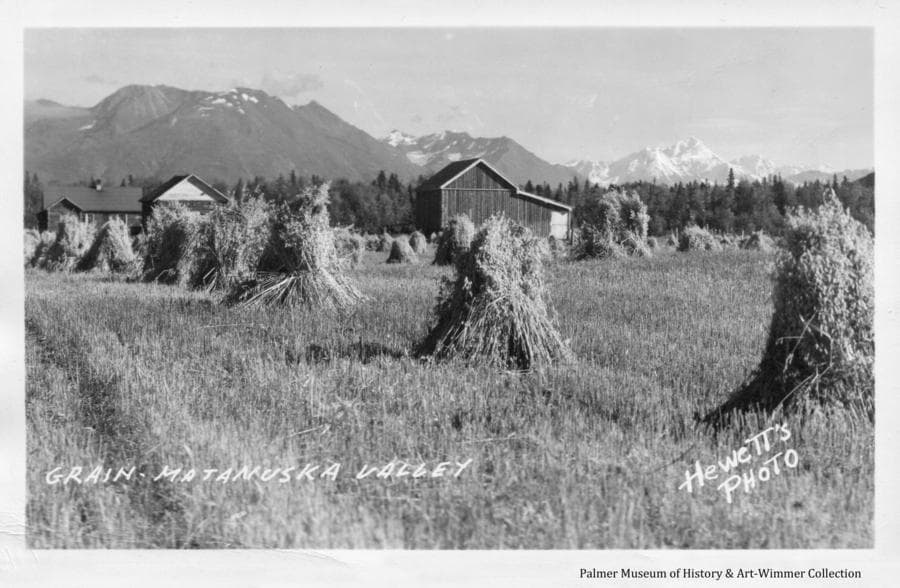 Image shows a farmstead with a barn not of the typical Colony style, with shocked grain in foreground and heavy forest beyond.  Mountains are in background with Mt. Marcus Baker in the Knik River Valley visible.
