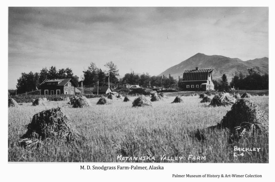 Image is of a field of harvested and shocked grain in foreground with a log house and Colony-style barn and other buildings in middle ground.  A fringe of trees frame the farmstead with Lazy Mountain in background.  This farm belonged to M. D. Snodgrass who was instrumental in establishing the Matanuska Experiment Farm and in recruiting farmers from the states to come to Alaska to farm.  He was also a supporter of the Matanuska Colony project and later made part of his farm land available for growth of the city of Palmer.