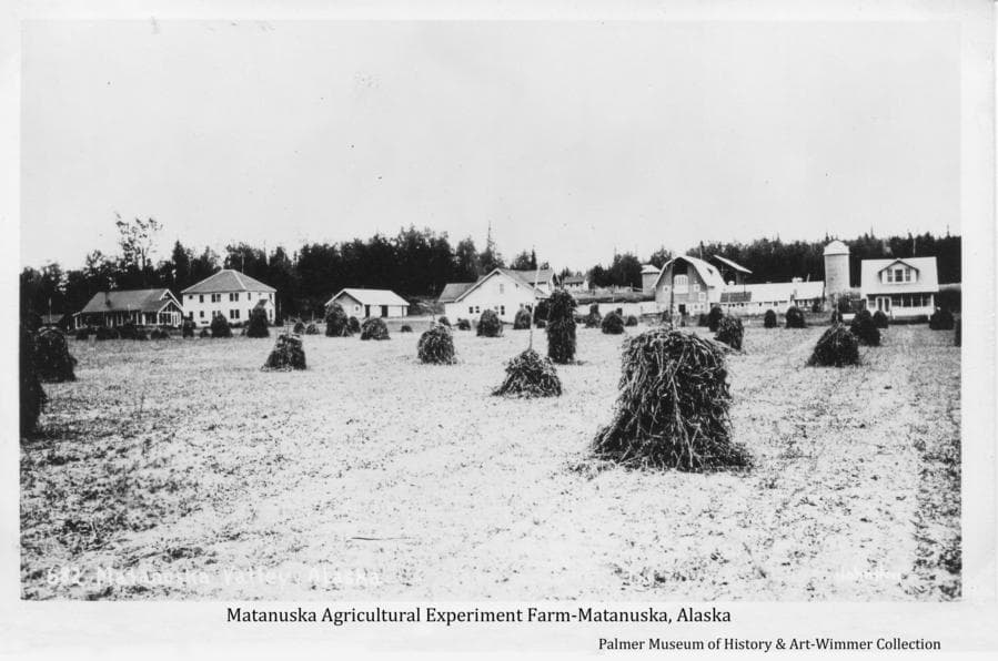 Image is of the Matanuska Experiment Farm with harvested loose hay formed into stacks on hay stakes in foreground with farm buildings beyond.  The differences in size and shape of the hay stacks suggest they may reflect experiments in either plots of different production techniques of the hay throughout the field or different configuration of the stacks for best curing the hay.  Heavy forest forms the backdrop.