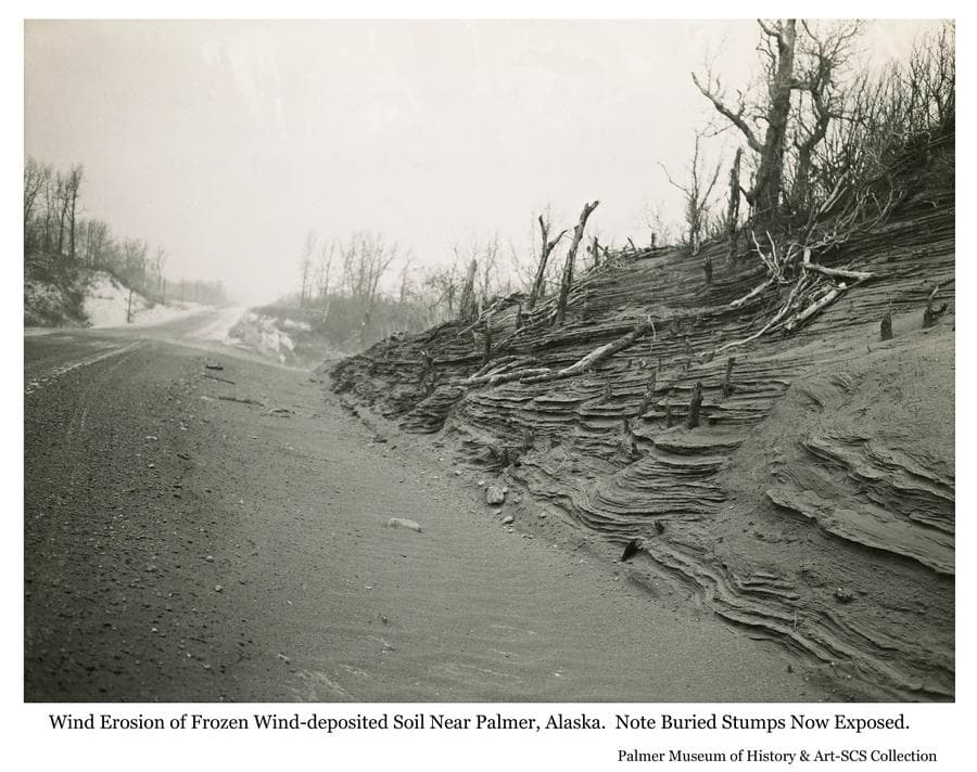 Image shows wind erosion of frozen roadside soil exposing stumps of trees previously buried by air-born soil deposited by winds off of the Matanuska River out of view to the left.