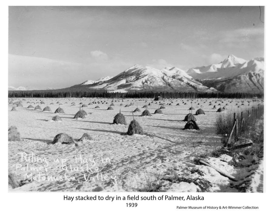 Image shows a snow-covered field of harvested hay formed into stacks, mostly on vertical stakes.  One larger stack is seen near the center of the field. Lazy Mountain and Buyer's Peak are in background.  Field is identified as located on the east side of the road and railroad tracks across from the Thuma Farm south of Palmer in 1939.