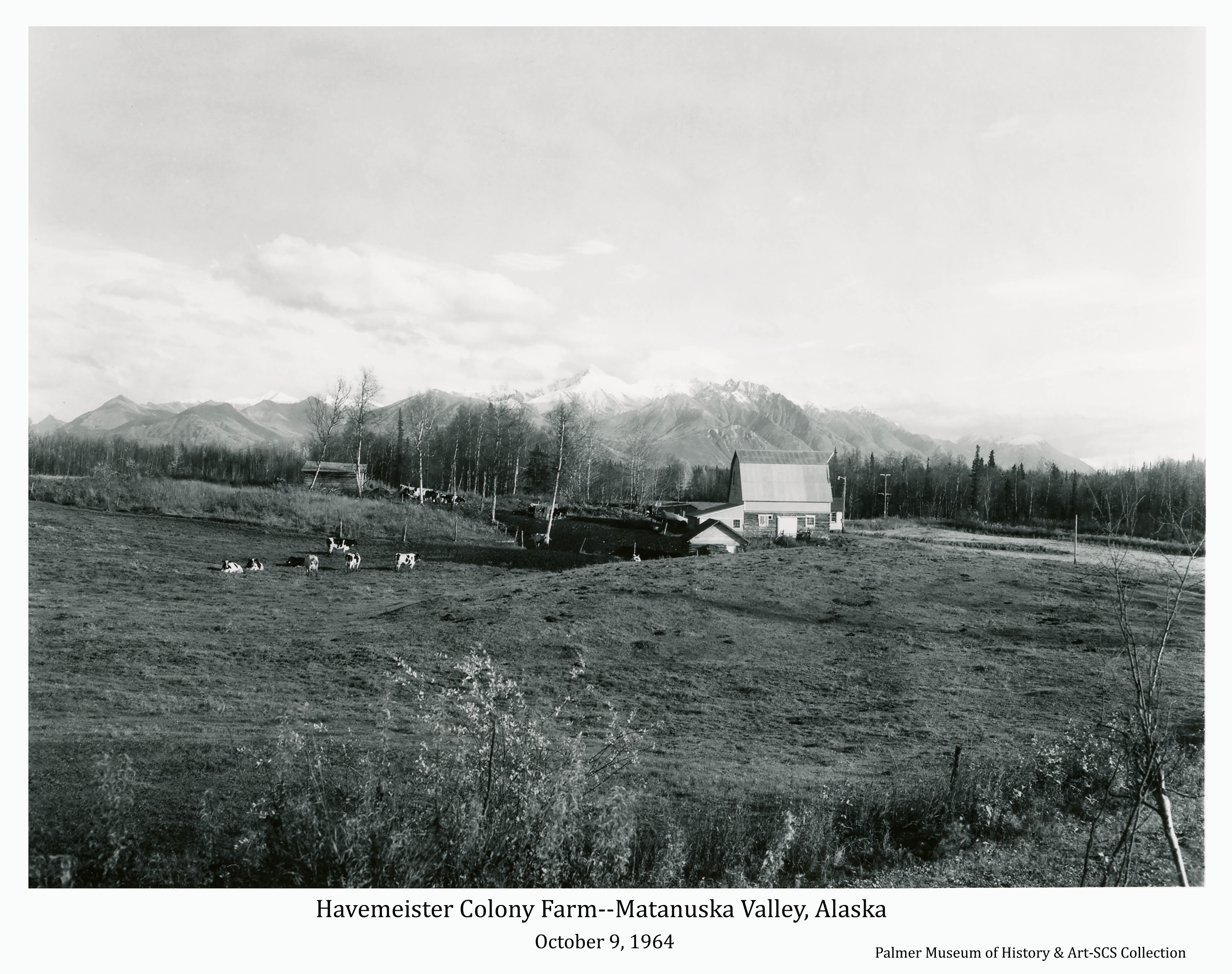 Image is of the farmstead of Colonists Arnold and Emmy Havemeister on tract # 167 along East Bogard Road between Palmer and Wasilla.  A typical Colony barn and other outbuildings are evident.  Dairy cows are visible in the pasture and feed lot.  Snow-capped Chugach Mountains are in background.