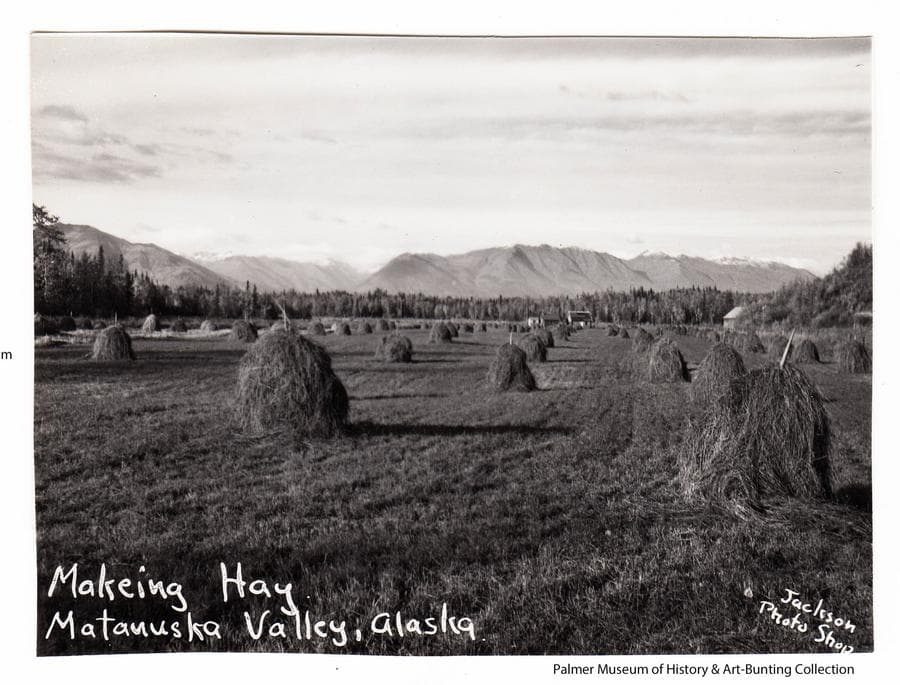 Image is a northerly view of a hay field with many haystacks in foreground and middle ground.  A house and other buildings are visible in far middle ground.  Heavy forest surround the field with Talkeetna Mountains in the background.