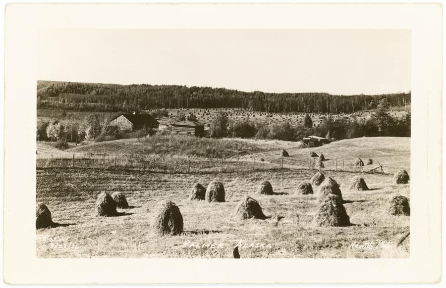 This is a postcard photo of a homestead including fields in foreground with harvested hay put up in stacks.  A barn and other buildings are in middle ground with scattered trees.  Other fields are in far middle ground with hay stacks and heavy forest beyond.  Close examination reveals two different types of haystacks in the far field and a man working there.  Mount Susitna is faintly visible beyond the forest in background.