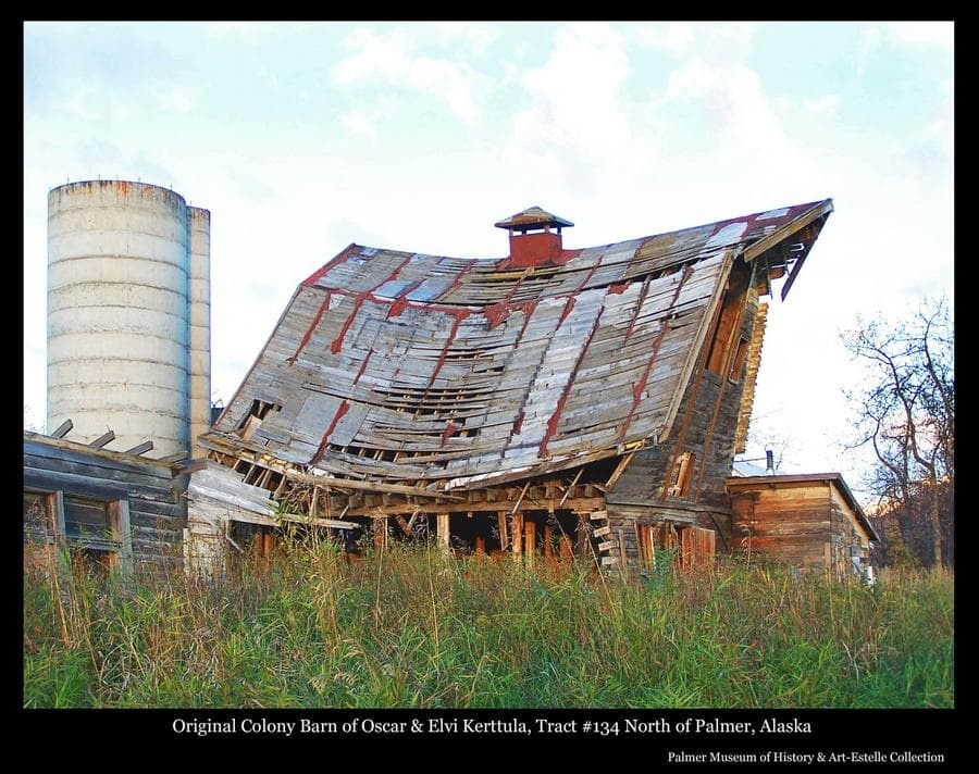 Image is a summer view of a Colony Barn, identified as located on Tract #134 north of Palmer, having originally belonged to Colonists Oscar and Elvi Kerttula.  The barn exhibits significance evidence of advanced stages of collapse and came down in 2006.  A smaller attached structure, perhaps a milking parlor, is at right, part of another smaller log structure, perhaps a chicken coop, is at left, and a concrete upright silo is behind at left.
