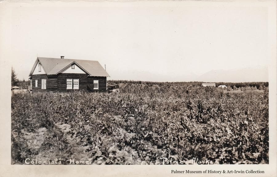 Image is a view across a field of row crops to a log house in middle ground.  An automobile is parked next to the house.  At right in background, two buildings which appear to be a house and a tent, are partially visible on an adjacent farm.  Mountains are faintly visible in background with Lazy Mountain appearing beyond the adjacent farm