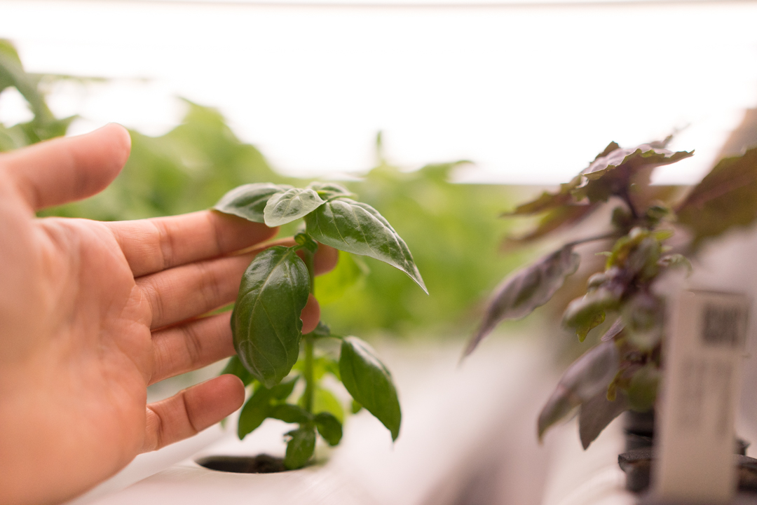 "Discover the inputs and conditions necessary for happy, productive plants. Recommended companion courses: ""Basics of Hydroponic Growing & Systems"" and ""Seeding & Crop Selection"""