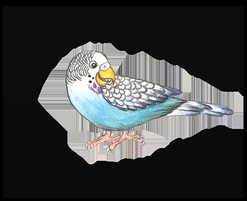 jollybirdstudio.com