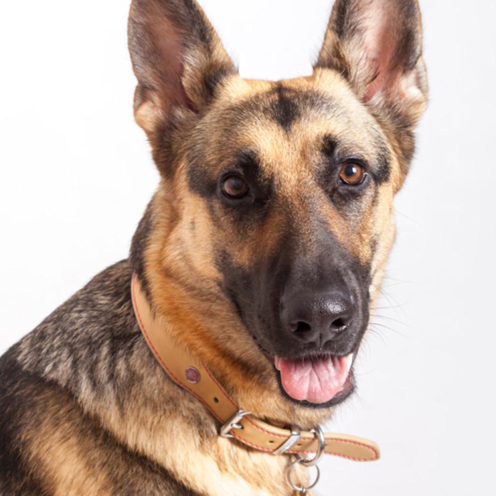 Dog gift ideas for dog treats