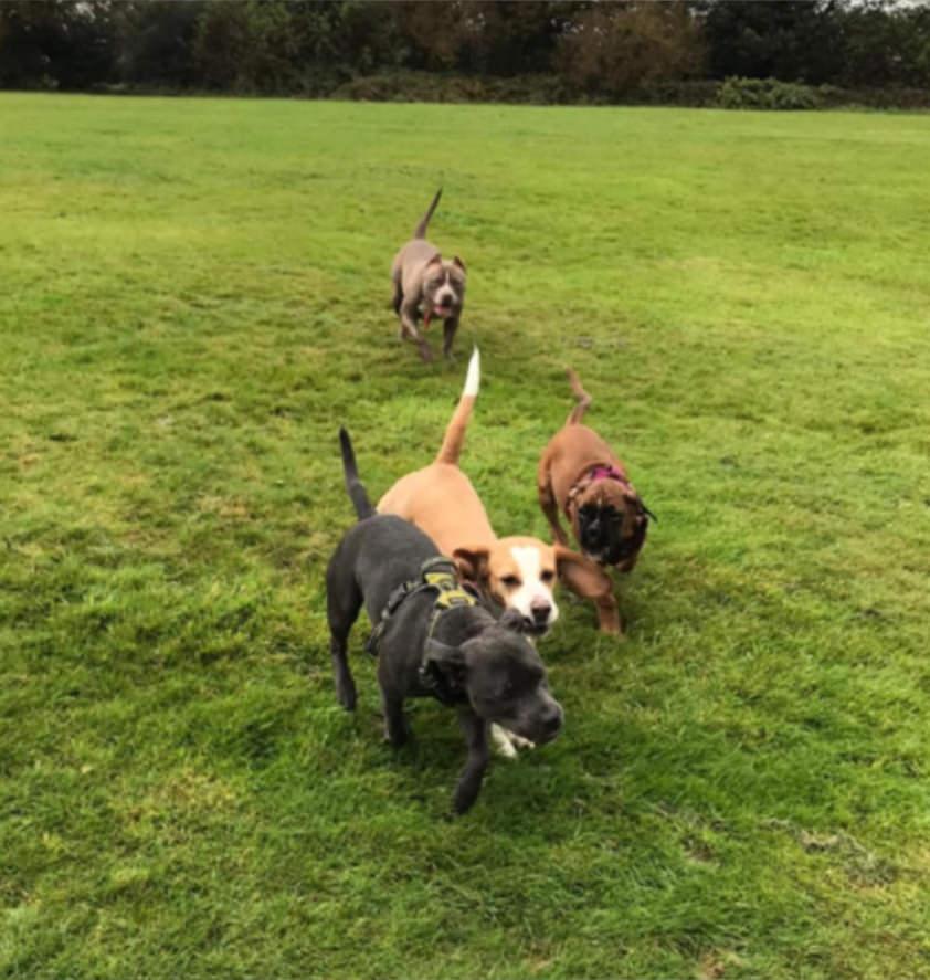 individual or group Dog walking in Bradford