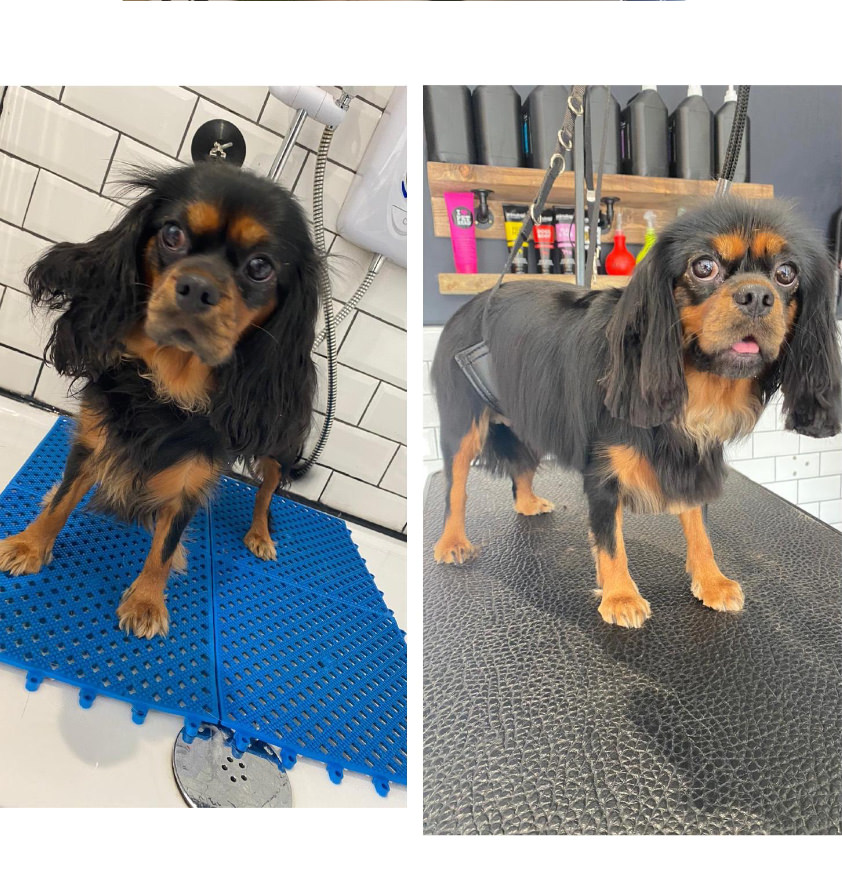 Dog grooming service at the Hound Ville in Bradford