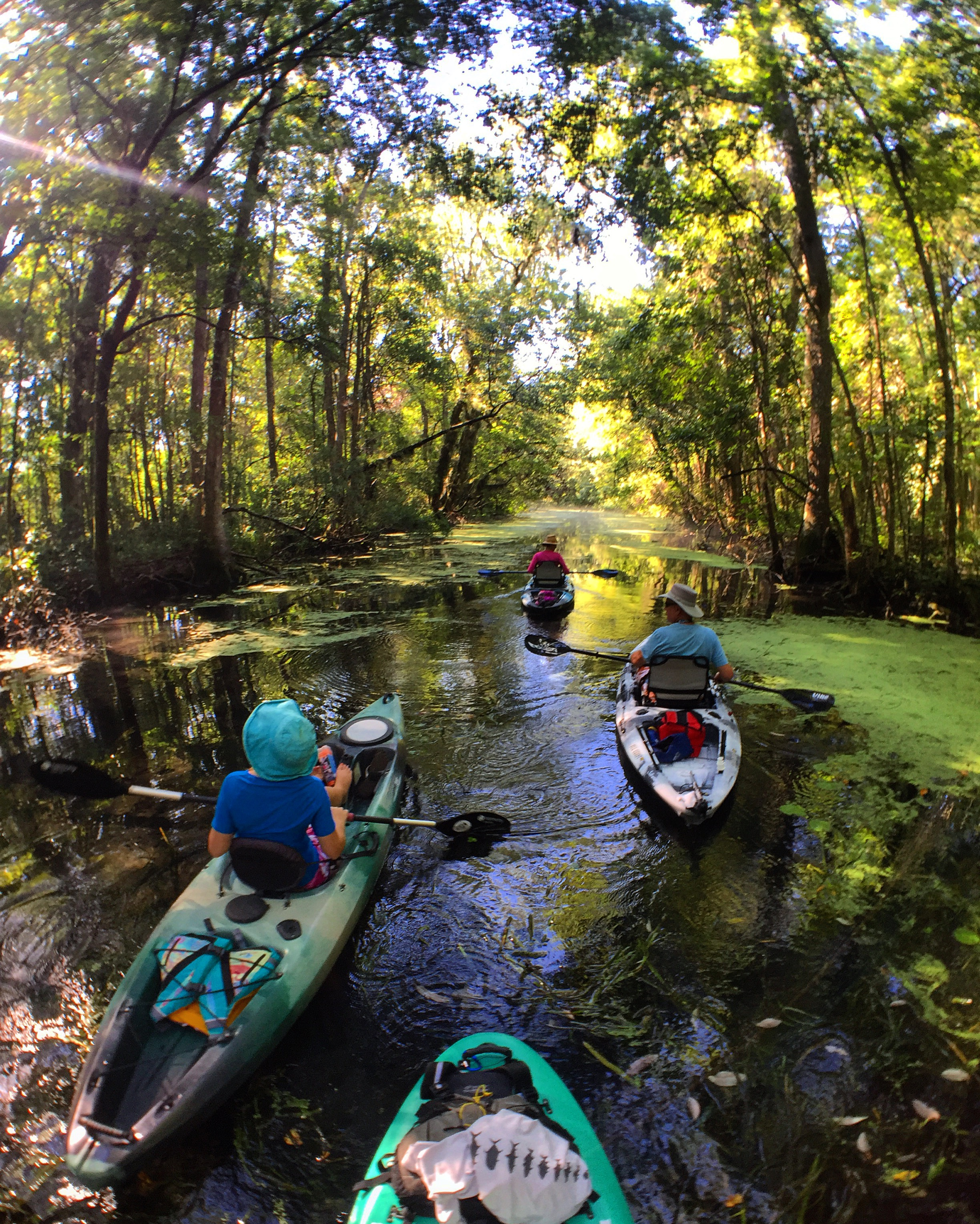 Group of kayakers paddling under a beautiful tree canopy while on an eco-tour.