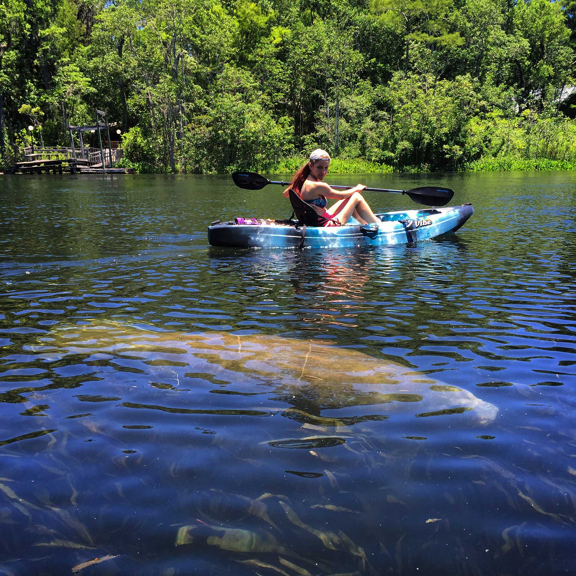 Young woman paddling past a manatee in a kayak.