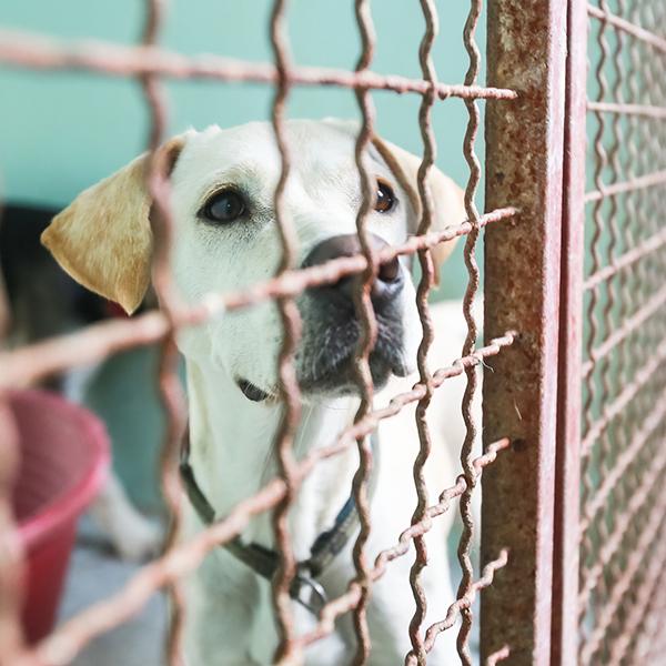 A sad dog in a dog shelter.