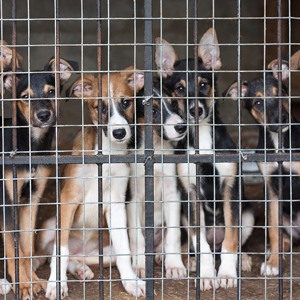 Many dogs available in the dog shelter.