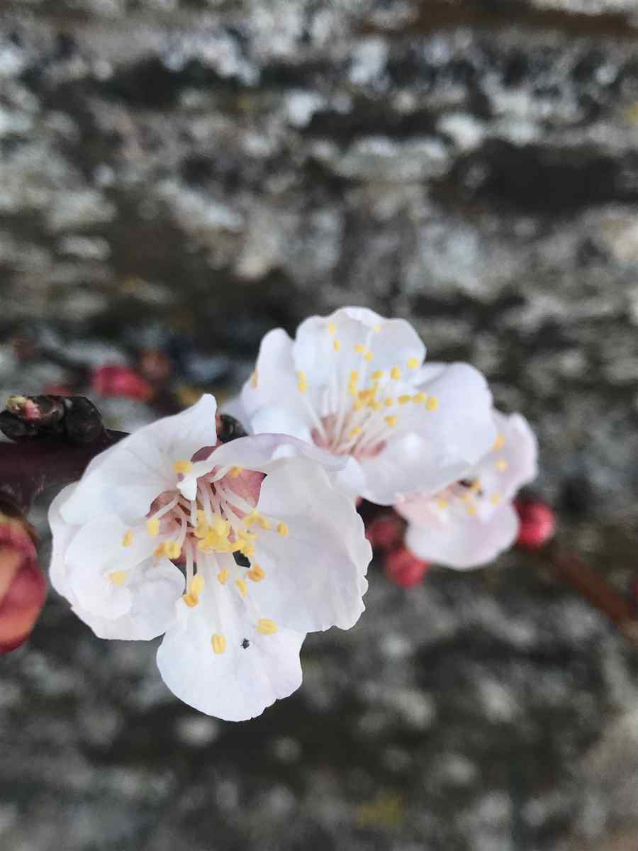 Ballymaloe Walled Garden Blog 2019 #1