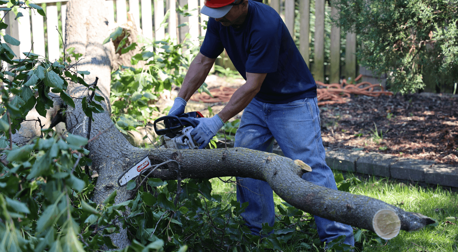 Tree Trimming in Chicagoland by Brookfield Tree Service