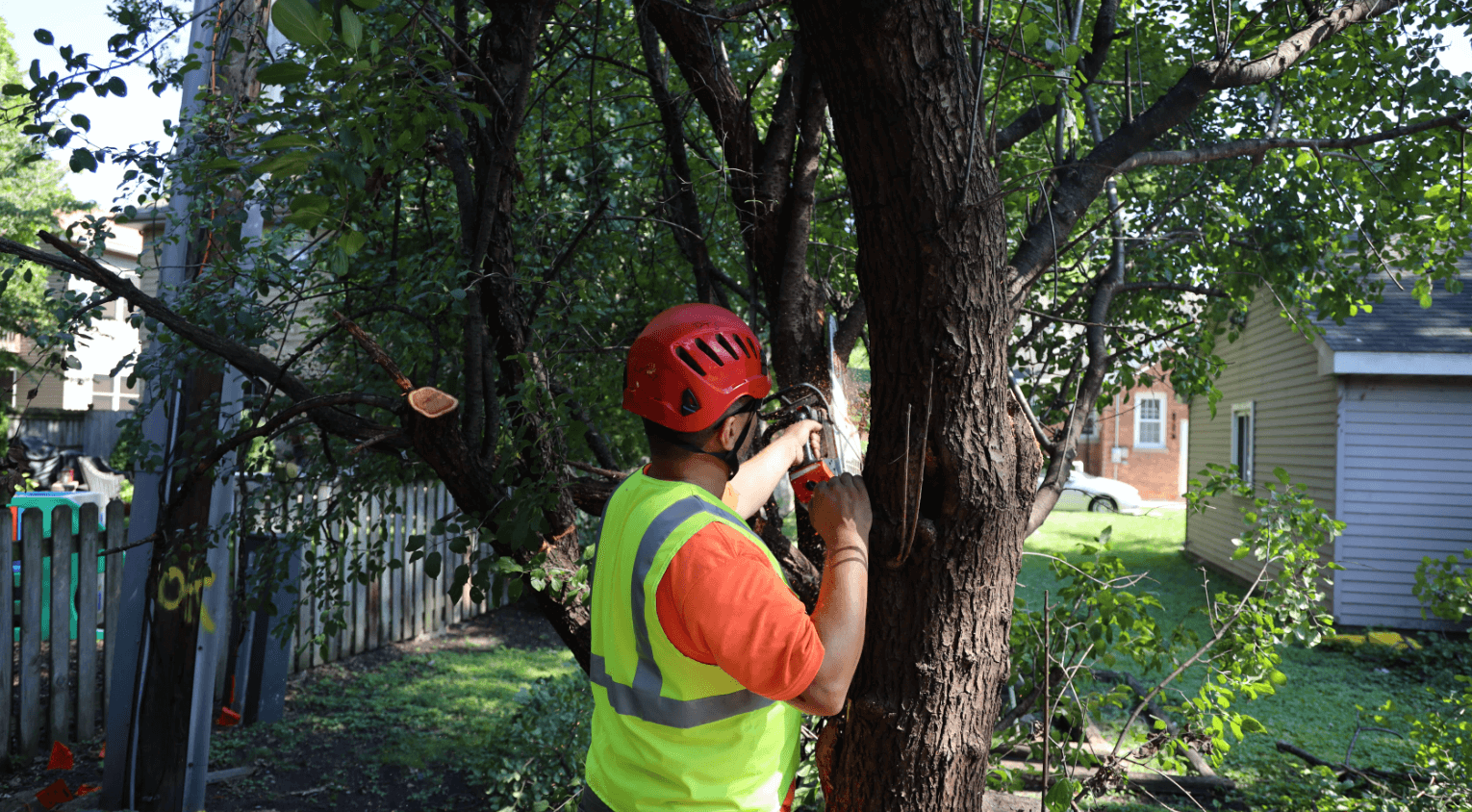Tree Removal in Chicagoland_Brookfield Tree Service