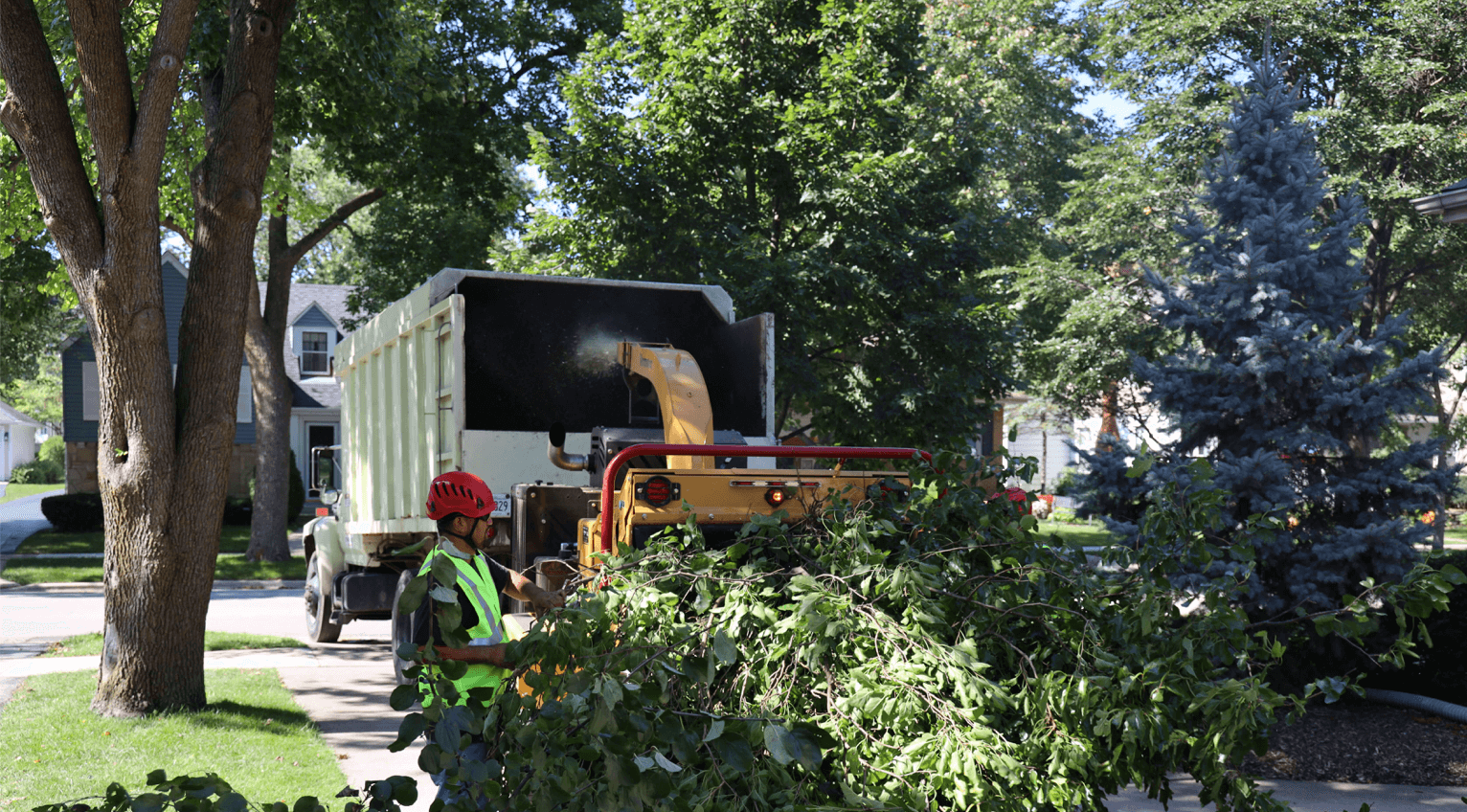 Lot Clearing in Chicagoland_Brookfield Tree Service