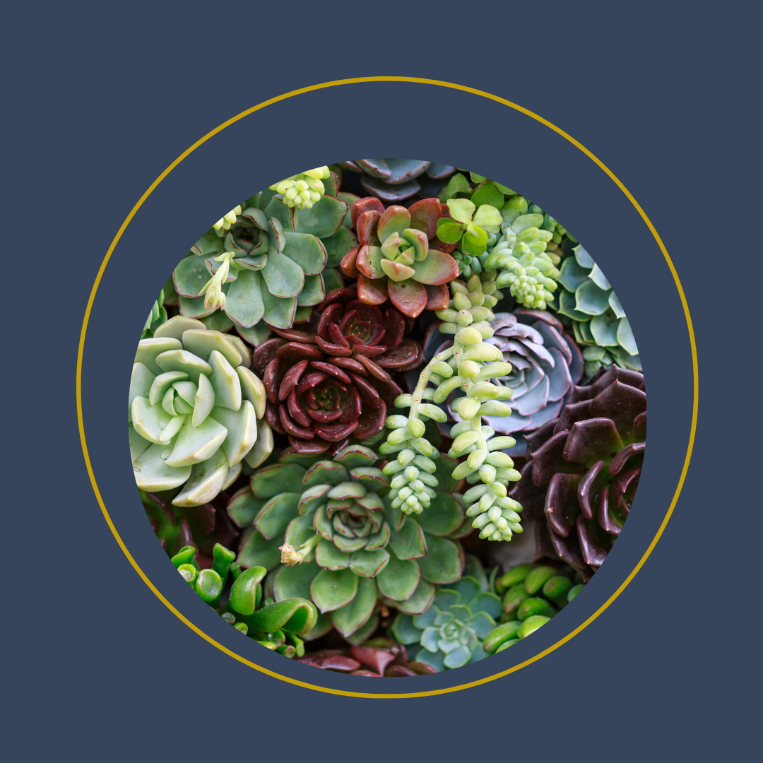 A round image of green and purple succulents.