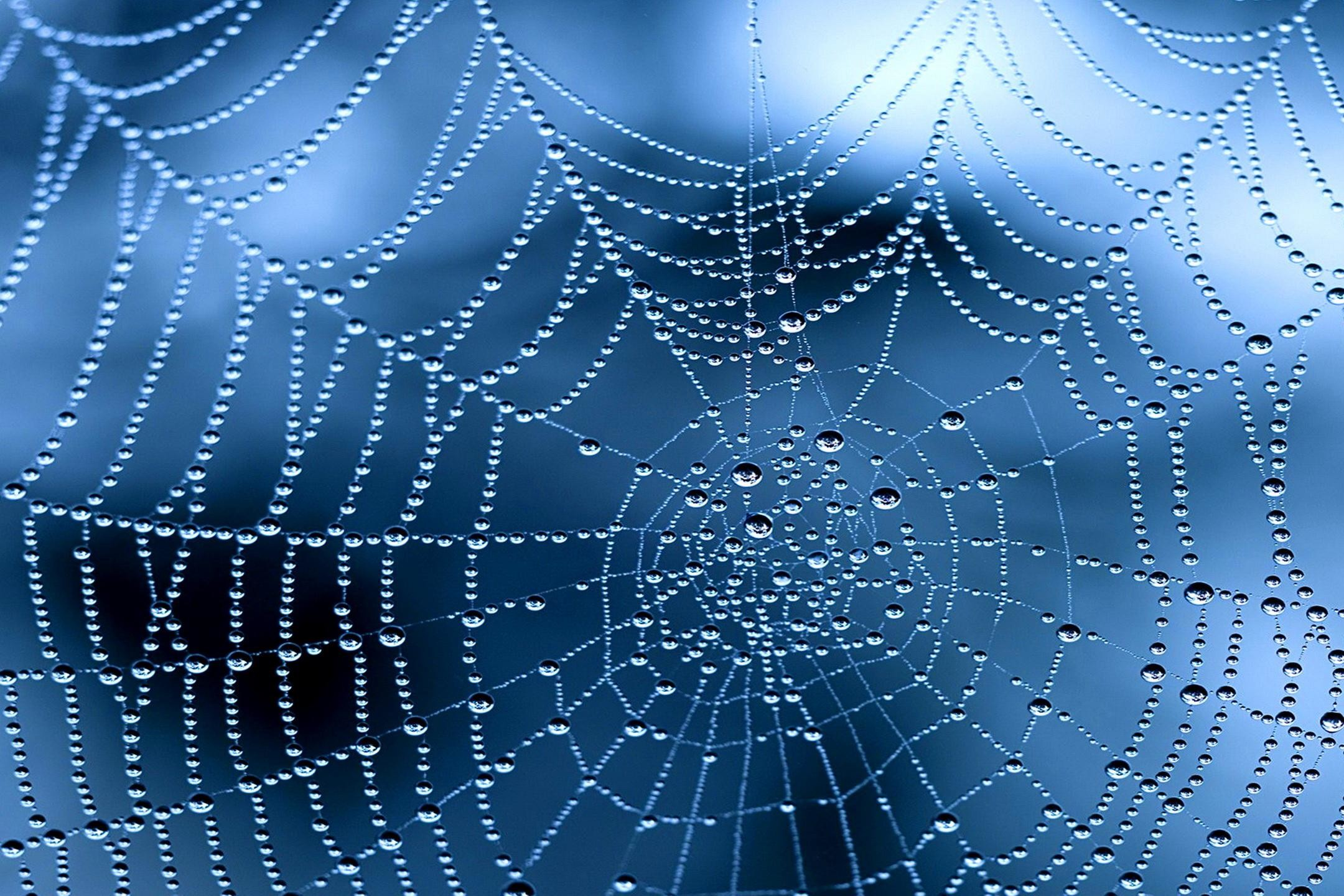 Beautiful spider web against a blue background with dew drops on it.