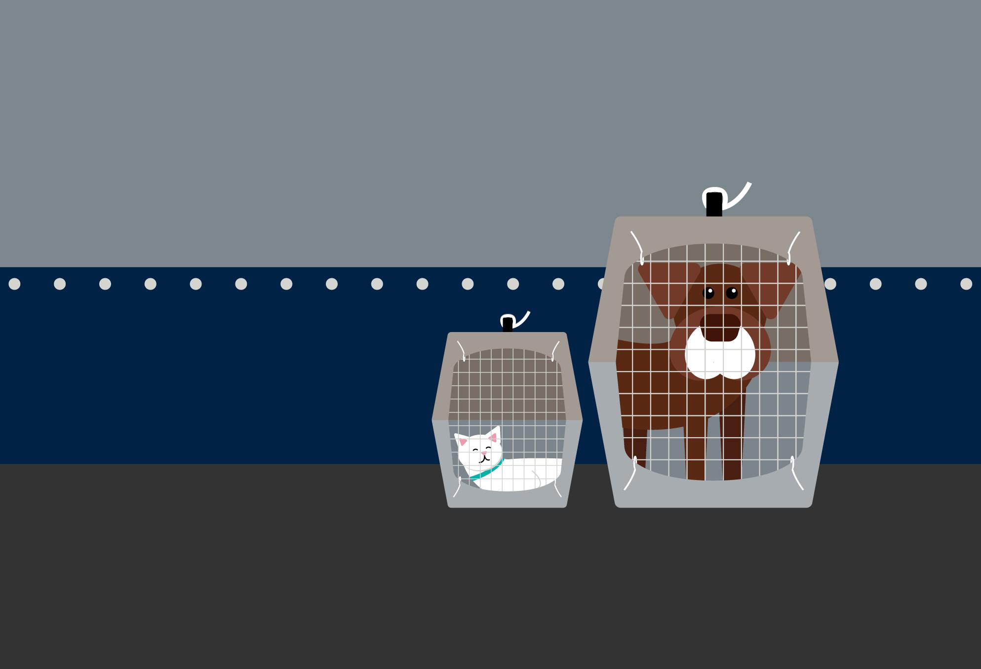 PetSafe Feature image