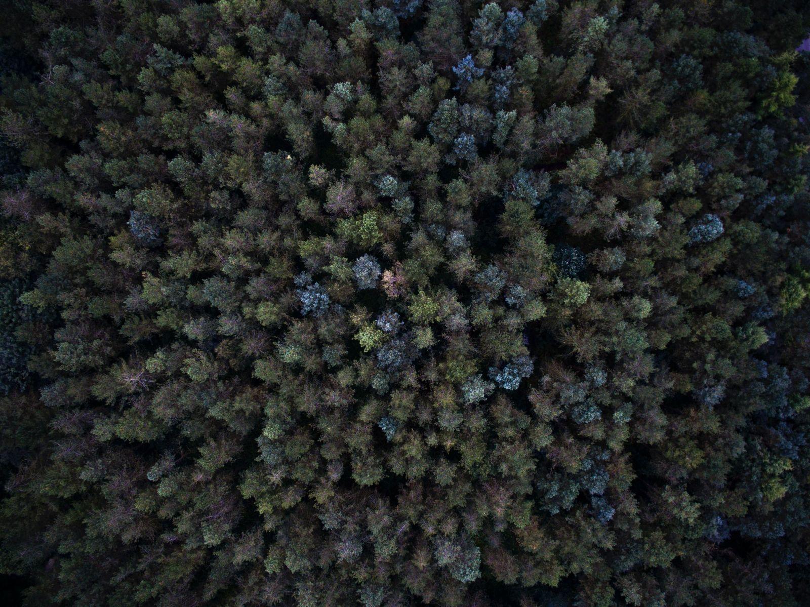 forest birds eye view