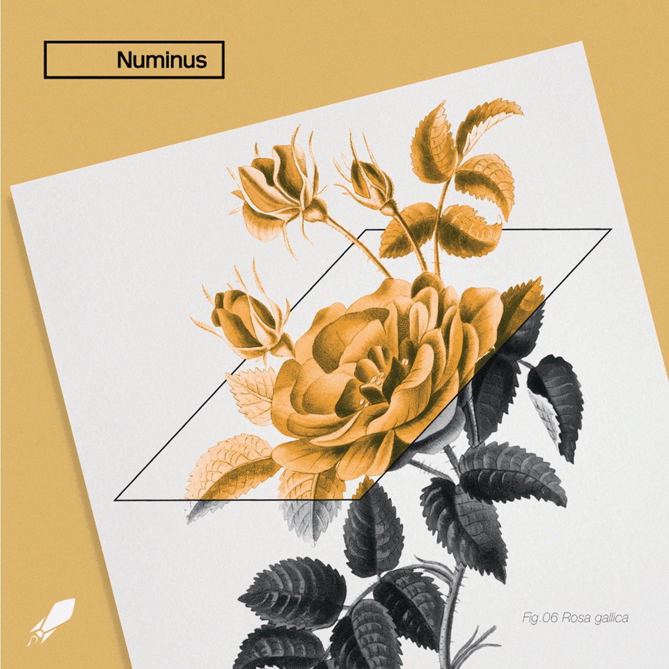 Beautiful branding for Numinus by Skyrocket Digital, a digital agency in Vancouver, BC
