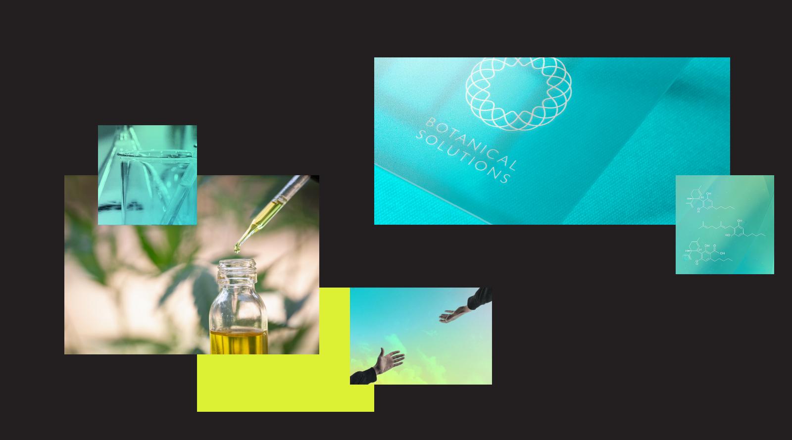 Botanical Solutions CBD by Wink Digital