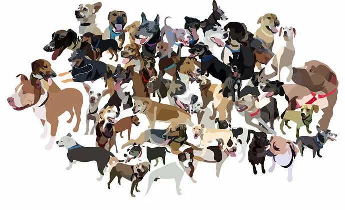 Cartoon drawn by a freelancer on Fiverr that shows the first fifty dogs Daniel Wallen walked. Pit bulls, chihuahuas, dachshunds, shepherds, terriers, and many other breeds are shown.