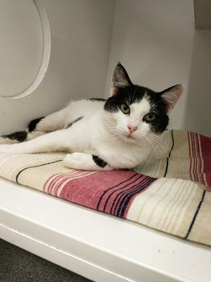 Black and white cat laying on a pink patterned blanket