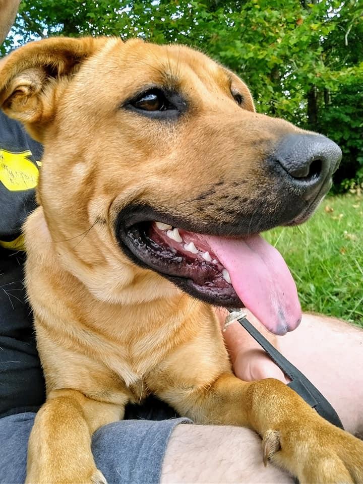 Tan dog with big brown eyes laying on Daniel Wallen's lap.