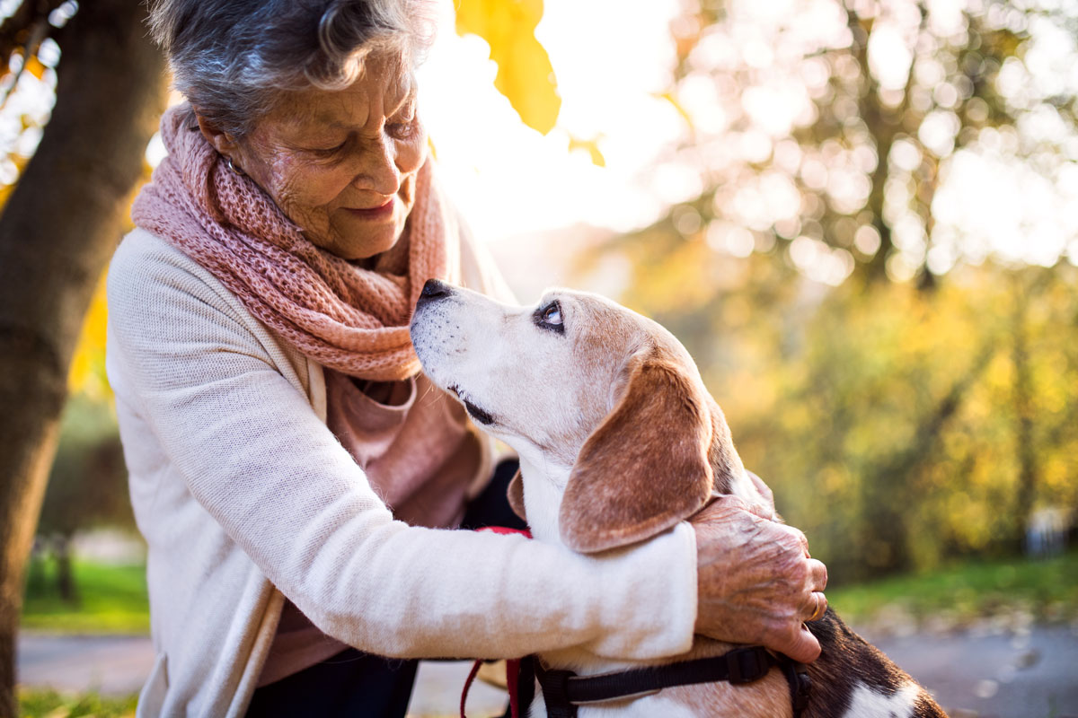 Senior citizen woman outside in autumn with her beagle dog