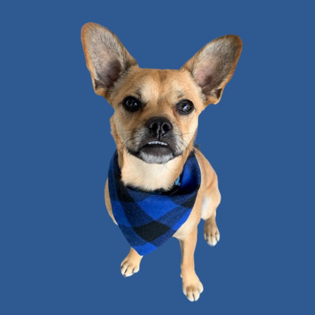 Dog mascot for Dental Ben's