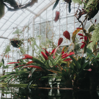 screw-pile-greenhouse-image