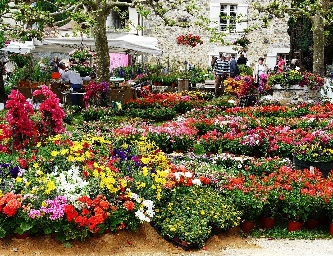 Flower trade - St Jean de Cole
