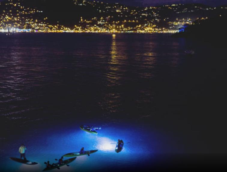 Kayak nocturne dans les Îles Vierges
