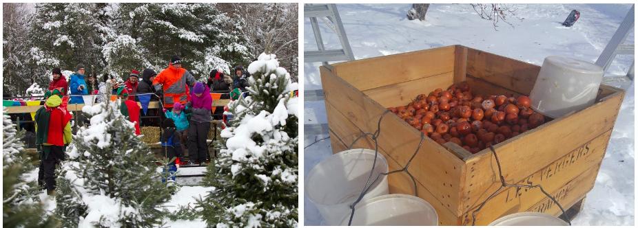Atoceuillette de sapins de Noël et de pommes gelées