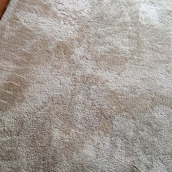 Carpet stain removal in Pace, FL