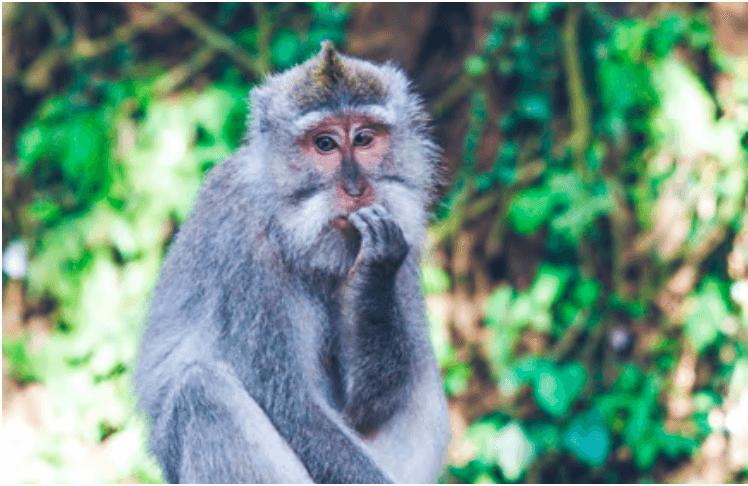 Unsubscribe monkey