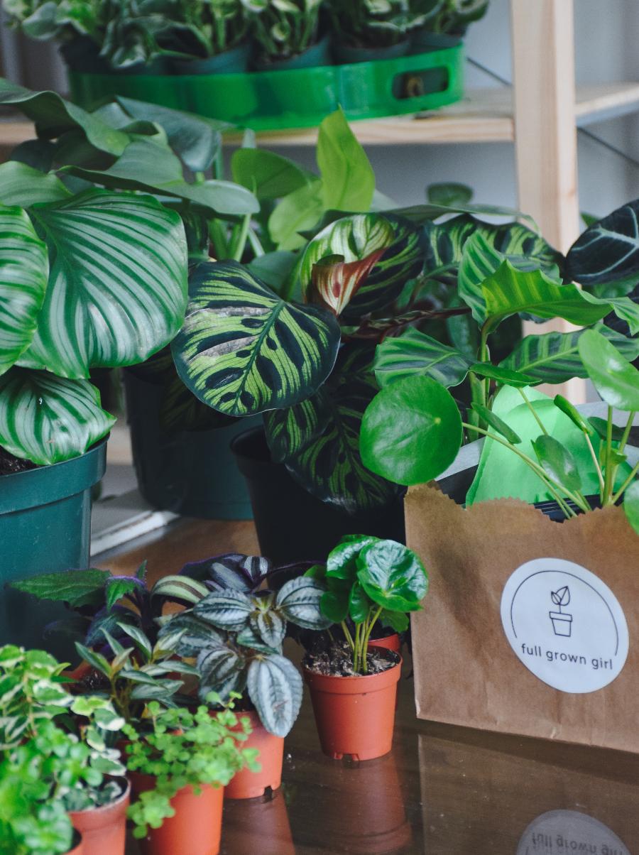 Plant Pop Up Shops