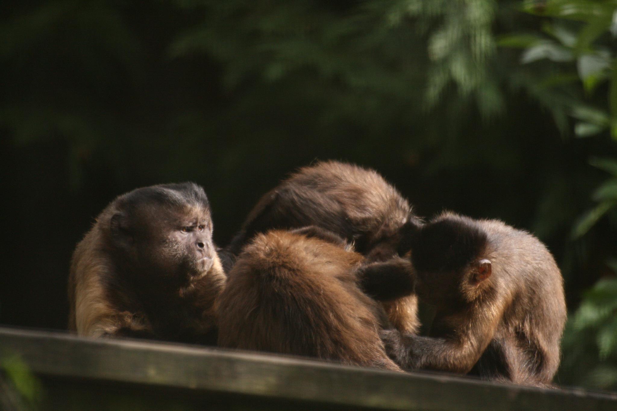 Wild Futures Monkey Sanctuary