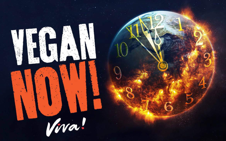 Viva! Cinema Advert & Social Media Ad