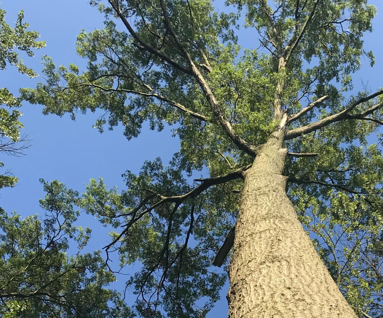 Maley & Wertz Hardwood Lumber – Krikham Hardwoods Sawmill