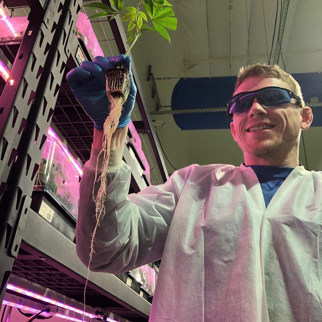 Man in cannabis lab