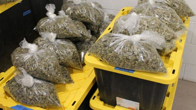 cannabis inventory software