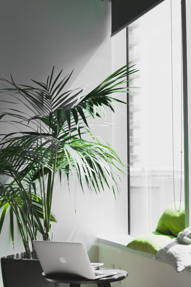 a plant in the office space