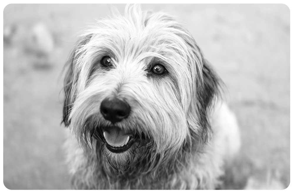 Sullivan Hund Namo Agentur für Branding & Webdesign in Bern